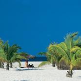 xanadu-palms2.jpg