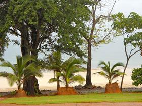 Trump-Beach-Club-Landscaping.jpg