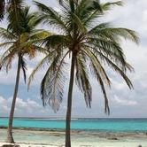 palm-trees-on-beach-vacation-nki.jpg