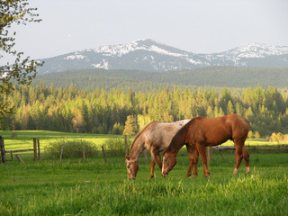 WPC News | Majestic Idaho and the Western Pleasure Guest Ranch