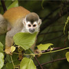 09-WPC-Golfito-Marina-Village-Resort-Titi-Monkey.jpg