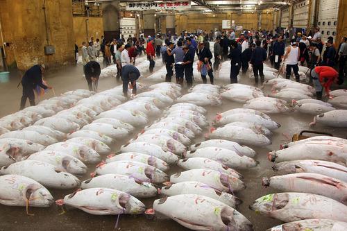 Tsukiji-fish-market-today-(Tokyo).jpg