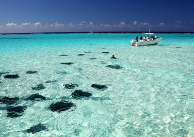 WPJ News | Stingray City, Grand Cayman - Cayman Islands Department of Tourism