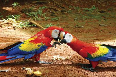 Costa-Rican-wildlife-is-a-kaleidoscope-of-color.jpg