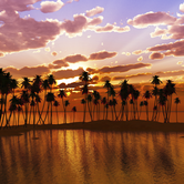palm-trees-on-Hawaii-Island-chain-keyimage.png
