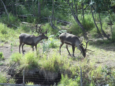 Wildlife-In-Fairbanks.jpg