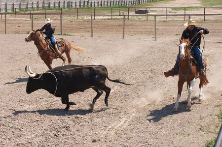 At-the-Colorado-Cattle-Company,-you-ll-be-ridin-and-ropin-before-you-know-it.jpg