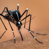 Zika-virus-mosquito-keyimage.jpg